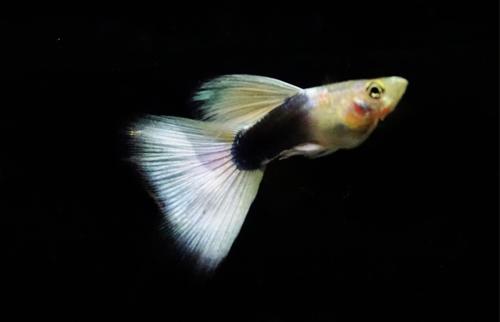 Types Of Pet Fish In India Fishtankfacts Com